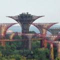 solar-generating super trees in Singapore (photo Güldem Üstün)