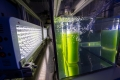 Sustainable oil from algae: the technology is ready, what about the politics?